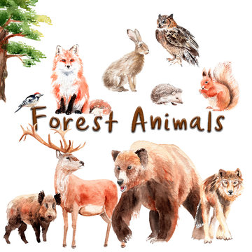 watercolor set of forest animals: watercolor set of forest animals: bear, wolf, fox, hare, owl, boar, deer