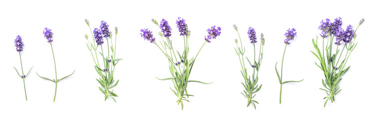 Lavender flowers Floral banner flat lay