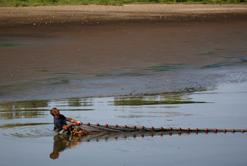 A fish farmer recues fishes from the almost dried up Landes pond in Lussat, central France