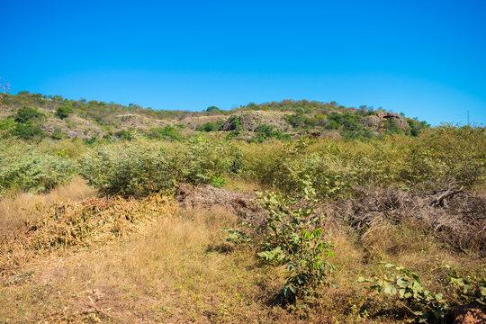 Caatinga landscape in Oeiras, Piaui - Brazil