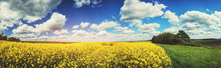 Panoramic summer landscape with rapeseed field