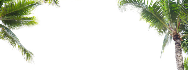 Fotobehang Palm boom Panorama of coconut leaf frame isolate on white background whit copy space, Summer concept.