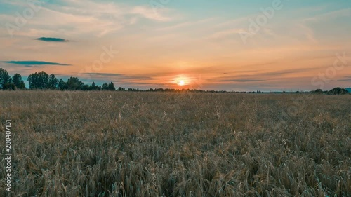 Fototapete Beautiful scenic sunset with rays of sun shining through clouds in sky 4K UHD Timelapse. Yellow sunset over the field of wheat. Sun sets over horizon closeup. Beauty of nature, agriculture, harvest