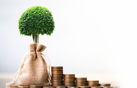 Coins in sack and small plant tree. Pension fund, 401K, Passive income. savings and making money. Investment and retirement. Business investment growth concept. Risk management.