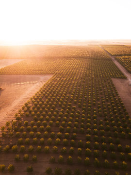 Almond Orchard from above. The Riverland, South Australia