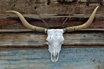 Longhorn Cow Skull