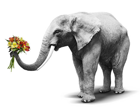 Black and white elephant handing a colorful bouquet of blooming flowers. Concept for greeting card, poster, cover, and more.