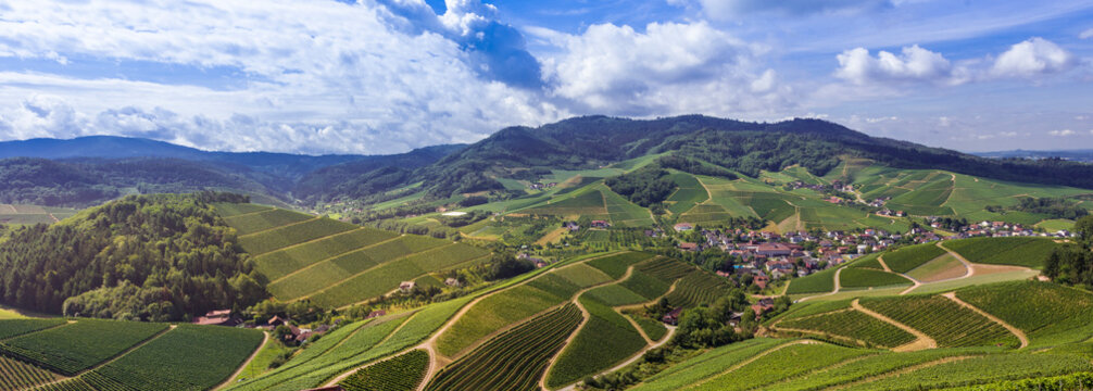 View from Staufenberg Castle to the Black Forest with grapevines near the village of Durbach in the Ortenau region_Baden, Baden Wuerttemberg, Germany
