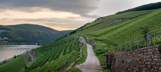 German vineyards in Rudesheim am Rhein Fototapete