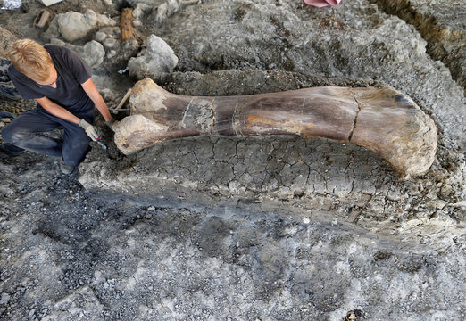 A man inspects the femur of a Sauropod after it was discovered earlier in the week during excavations at the palaeontological site of Angeac-Charente