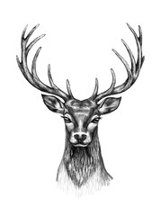 Deer Head  with Horns Pencil Drawing