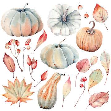 Watercolor pumpkins set.