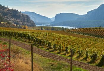 Okanagan Valley Vineyards Autumn. Hills full of vineyards in autumn in the Okanagan Valley, British Columbia, Canada.  Wall mural