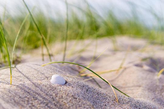 weiße Muschel in den Dünen, Ostsee