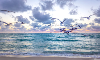 Feeding birds at idyllic beach at early morning time during sunrise. Miami South Beach with some seagulls in the beach, Florida, USA. Waves and beach time in a summer sunny day.