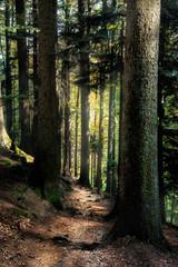 Keuken foto achterwand Bos in mist Märchenwald