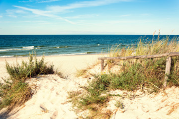 Fototapete - sea dunes and beach grass on summer time