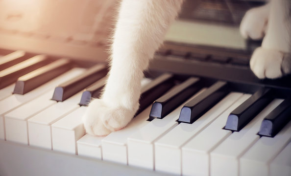 Cute bushy cat with white paws, illuminated by sunlight, with interest presses one paw on the key on the musical synthesizer, making a melodic sound. Even animals are drawn to creativity.
