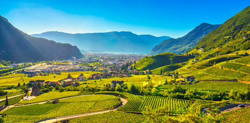 Photo sur Plexiglas Vignoble Vineyards view in Santa Maddalena Bolzano. Trentino Alto Adige Sud Tyrol, Italy.