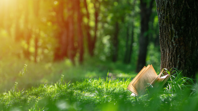An open book lying in the Park near the tree. Layout with copyspace. Nature background