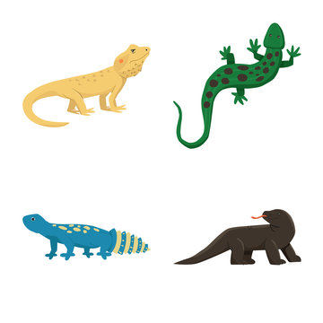 Vector design of animal and reptile icon. Collection of animal and nature vector icon for stock.