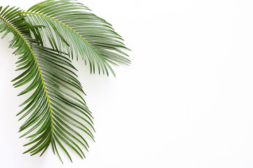 Green tropical palm leaves on white background.  Flat lay, top view. Wall mural
