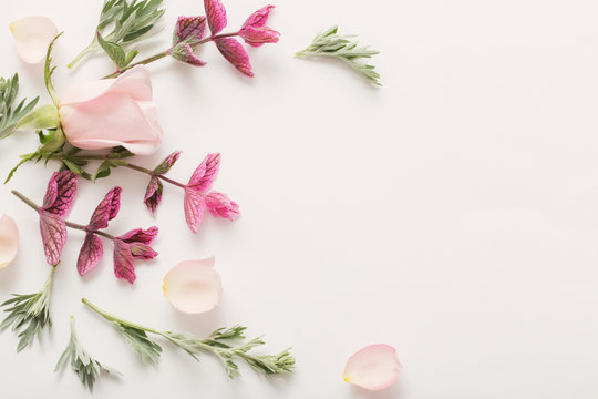 plants and flowers on white  background