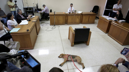 A dog called Campeon (Champion) attends the trial of its former owner in Costa Rica's first trial against an alleged animal abuser, in Atenas