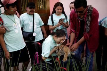 One of two bengal tiger cubs, who were rejected by their mother, interacts with children at La Pastora Zoo in the municipality of Guadalupe