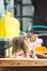 Little cute colorful kitten on a table