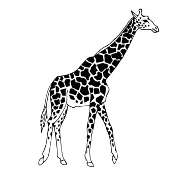 Vector hand drawn doodle sketch giraffe isolated on white background
