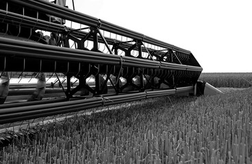 Farm implements: Closeup of a grain header of a modern combine harvester just before harvesting a cornfield