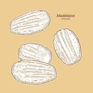 Madeleine de Commercy / Famous French pastry.