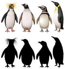 Silhouette, color and outline version of penguins