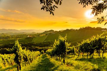 Wall Murals Vineyard View at South Styria Vineyard fields in sunset sun in summer. Tourist destination.