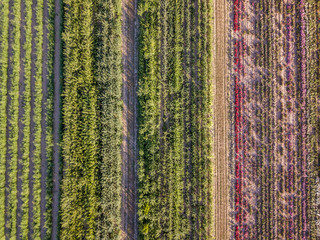 Aerial drone image of fields with diverse crop growth based on principle of polyculture and permaculture - a healthy farming method of ecosystem.