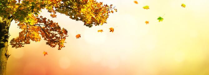 ahornbaum vor abstraktem hintergrund