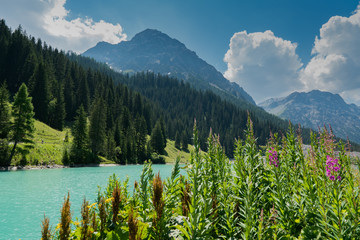 Wall Mural - summer mountain landscape with turquoise lake and wildflowers in the Swiss Alps