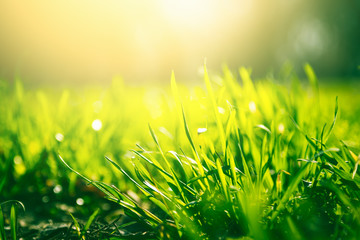 Fototapeten Lime grun Green grass background with sun light
