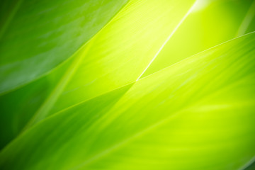 Closeup nature view of green leaf on blurred greenery background in garden with copy space using as background natural green plants landscape, ecology, fresh wallpaper concept. Fototapete