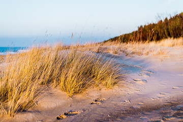 Coast of the Baltic Sea at sunset. Sand dunes, plants and water splashes close-up. Latvia