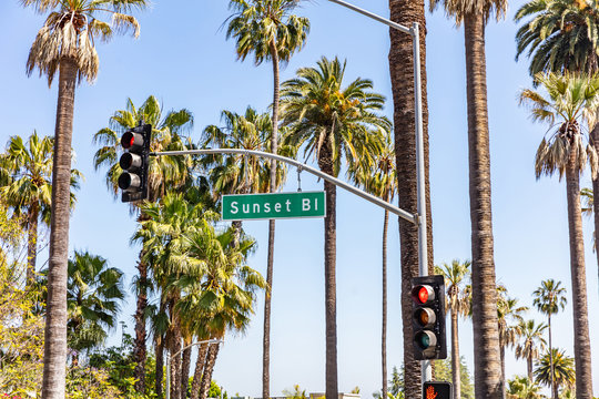 Sunset Bl. LA, California, USA. Green sign, red traffic lights and palm trees