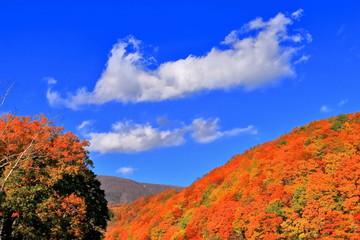 Foto auf Leinwand Dunkelblau 紅葉と秋の空