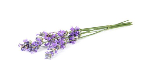 Beautiful tender lavender flowers on white background Wall mural