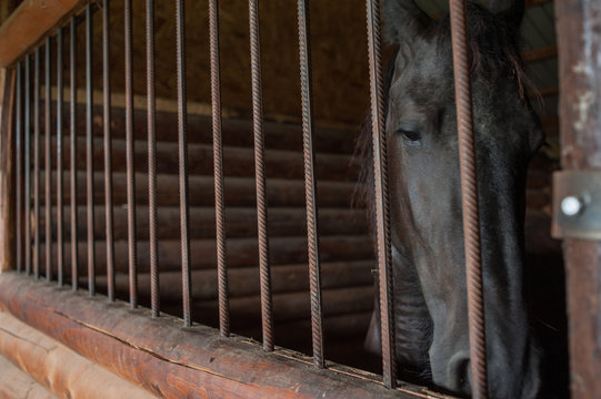 Horse at a farm in a stable behind bars.