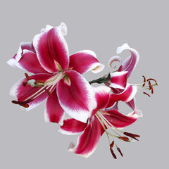 A bouquet of lily flowers on an empty background. Isolated image