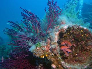 Papiers peints Aubergine Paysage sous-marin de Méditerranée, poissons et gorgones