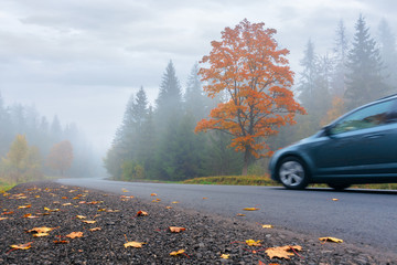 new asphalt road through forest in fog. car driving by in to the distance. mysterious autumn scenery in the morning. tree in orange foliage, some leaves on the ground. gloomy overcast weather.