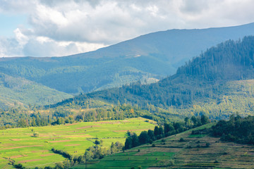 beautiful rural area of carpathian mountains. trees and agricultural fields on hills. landscape in dappled light. forest on the distant ridge. sunny weather with fluffy clouds on the blue sky