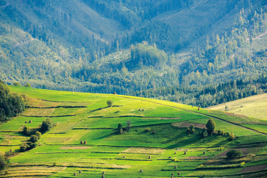 beautiful rural area of carpathian mountains. trees and agricultural fields on hills. landscape in dappled light. forest on the distant ridge. sunny weather